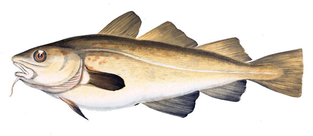 Un poisson pour nourrir le monde